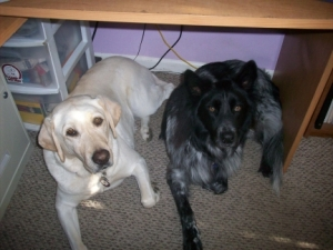 Maya and Pierson Under My Desk 2