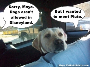 Maya Disneyland Pluto