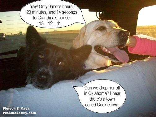 Funny Dog Meme Images : New funny dog memes american dog blog
