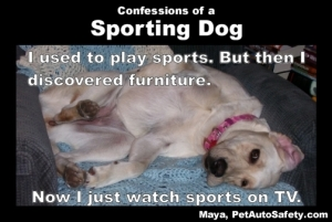 Confessions of a Sporting Dog