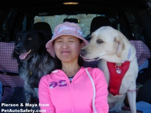 Dogs in SUV Maya Whispering to Girl