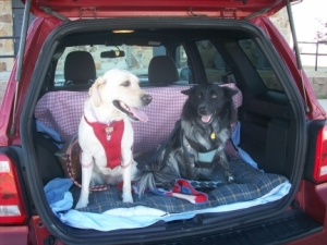 Maya Pierson SUV Dog Seat Belts