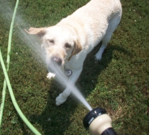 Watering the Dogs 013