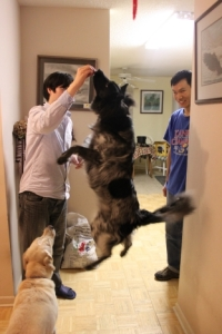 Jinbo Making Pierson Jump