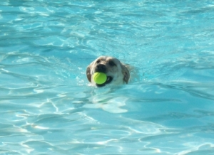 Maya Swimming with Tennis Ball
