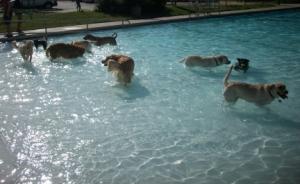 Maya at Young's Public Swimming Pool