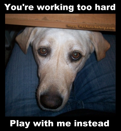 Dog Controversial Issues American Dog Blog