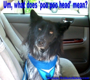 My Dog Pierson is a Poo Poo Head