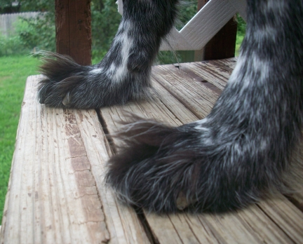 Why Do Dogs Have Long Hair Between Their Toes