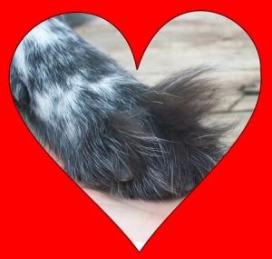 Pierson's Paw in Heart