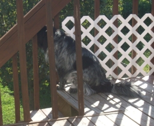 Pierson Keeping Watch on Porch 2