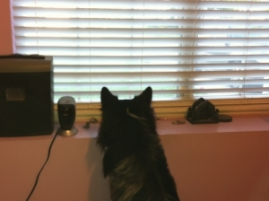 Pierson Looking Out Window