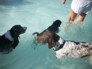 Maya and Other Dogs Pooch Plunge