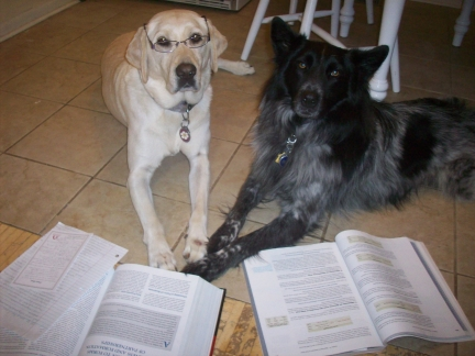 Dogs Studying 003
