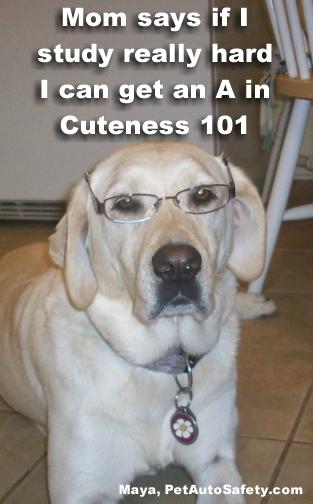 Student Dog Maya Wearing Glasses