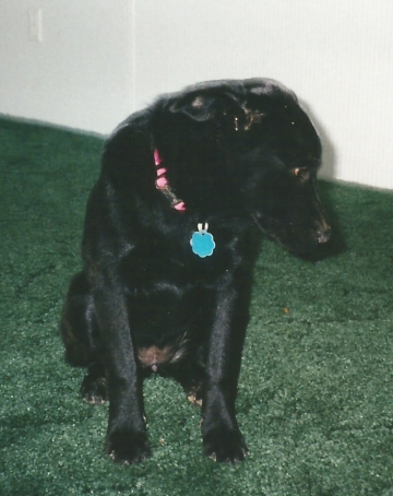 My Dog Sephi at 5 Months