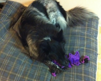 Pierson and Bat Dog Toy 2