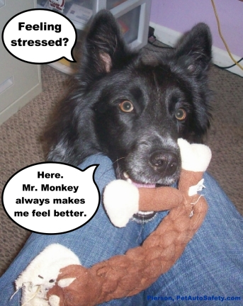 Pierson and Mr. Monkey Dog Toy