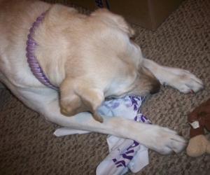 Handmade Dog Toys 009