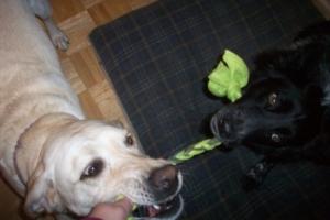 Maya Pierson Fleece Dog Toy 2