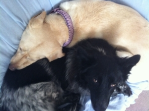 Maya and Pierson Cuddle on Couch 4