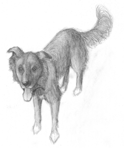 Zipper the Dog Final Sketch