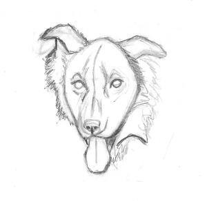 Zipper the Dog Head Sketch 2