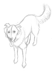 Zipper the Dog Sketch 1