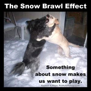 Snow Brawl - A Tussle of Two Dogs