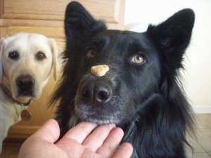 Pierson Tries to Balance Dog Treat on Nose