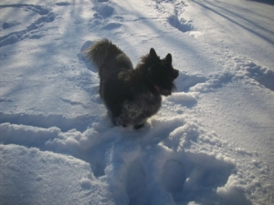 Dog Pierson in 12 Inches of Snow 005