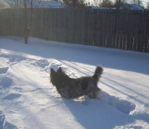 Dog Pierson in 12 Inches of Snow 008