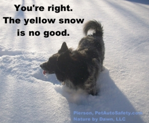 Dog Pierson Eating Yellow Snow Funny Caption