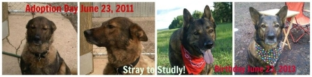 Rolo - From Stray to Rescue