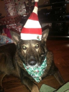 Rolo Wearing Elf Hat and Scarf