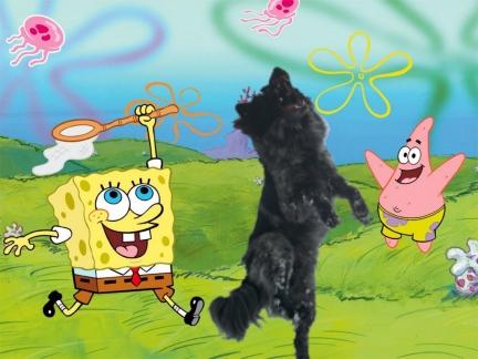 My Dog Pierson and Spongebob Squarepants