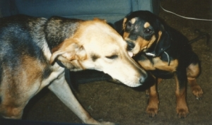 Dogs Becky Anne and Sheba