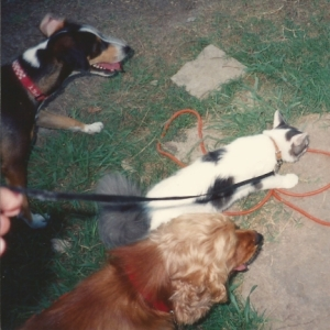 My Dogs and Cat Huckleberry Grady Scrapper