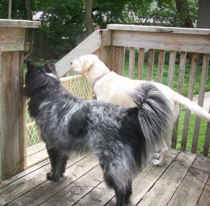 Two Dogs on the Back Porch