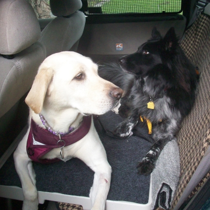 Dogs Maya & Pierson on Pet Dek in Car