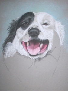 Drawing Rocky the Dog Step 5