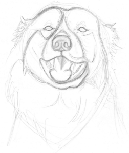 Third Sketch of Rocky the Dog