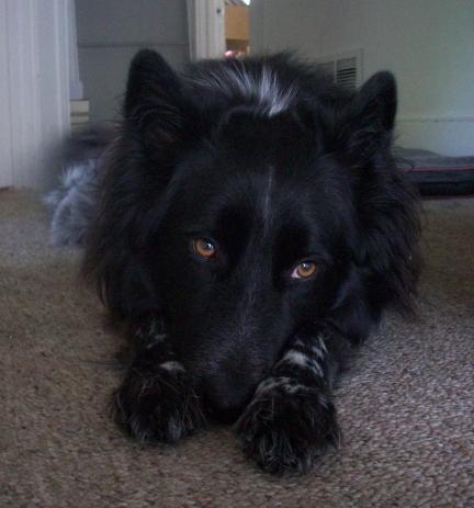 Dog Pierson Looks Sad