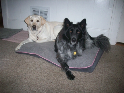 Dogs on New Dog Bed Cover