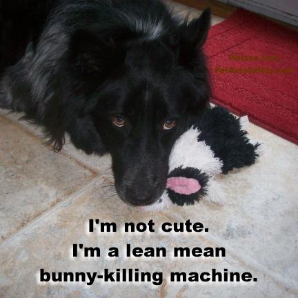 Pierson Dog Cute Bunny-Killing Machine
