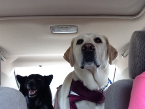Dogs on Road Trip to KS 2014