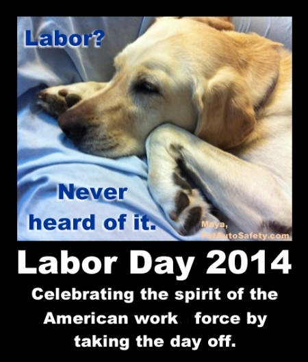 Labor Day Dog Sleeping