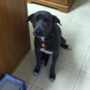 Cute Blue Lacy Dog Sitting
