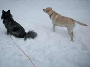 Dogs Maya and Pierson Looking at Frozen Squirrel