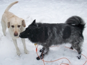 Maya and Pierson Giving Snow Kisses
